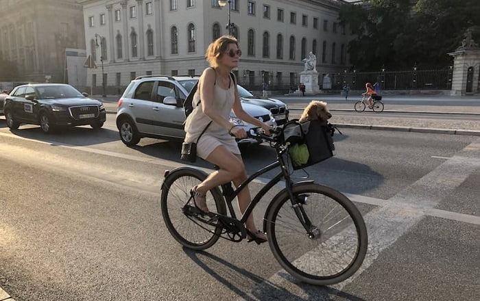 Hundefahrradkorb-Test