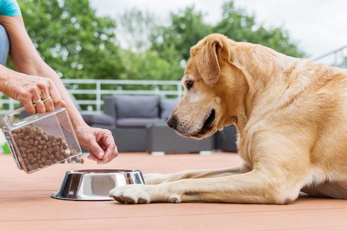 Hundenapf-Test